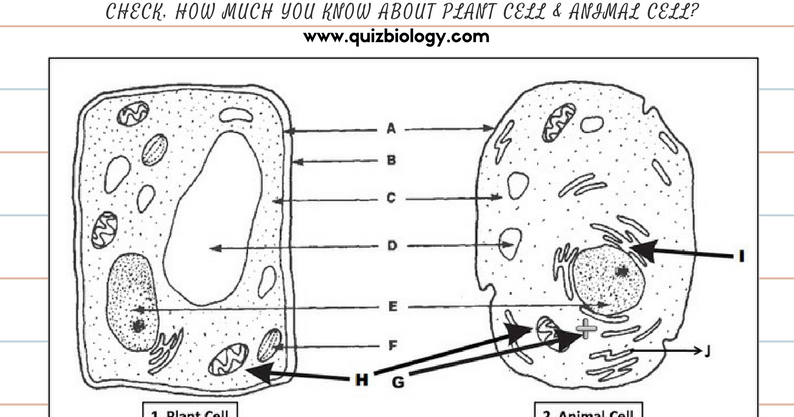 Animal cell diagram labeled pdf